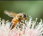 Study Finds Natural Fires Help Native Bees, Improve Food Security