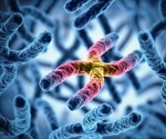 How Small Chromosomes Compete With Big Ones For A Cell's Attention