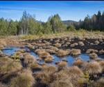 Low-Severity Fires Enhance Long-Term Carbon Retention Of Peatlands