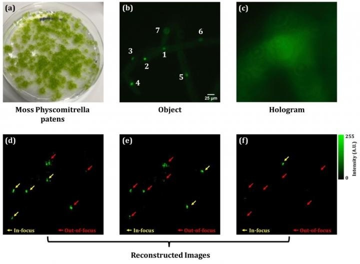 Researchers create 3D fluorescence and phase imaging of living cells based on digital holography