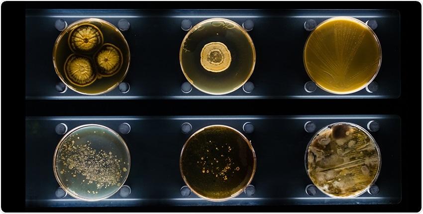 Recombineering technique may overcome barriers in bacterial engineering