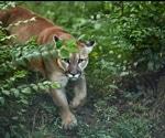 COVID-19 Lockdown Reveals Human Impact On Wildlife