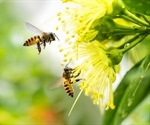 Agroforestry Is 'Win Win' For Bees And Crops