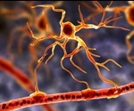 Astrocytes may play a key role in neurodegenerative disorders