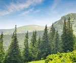 Climate extremes will cause forest changes