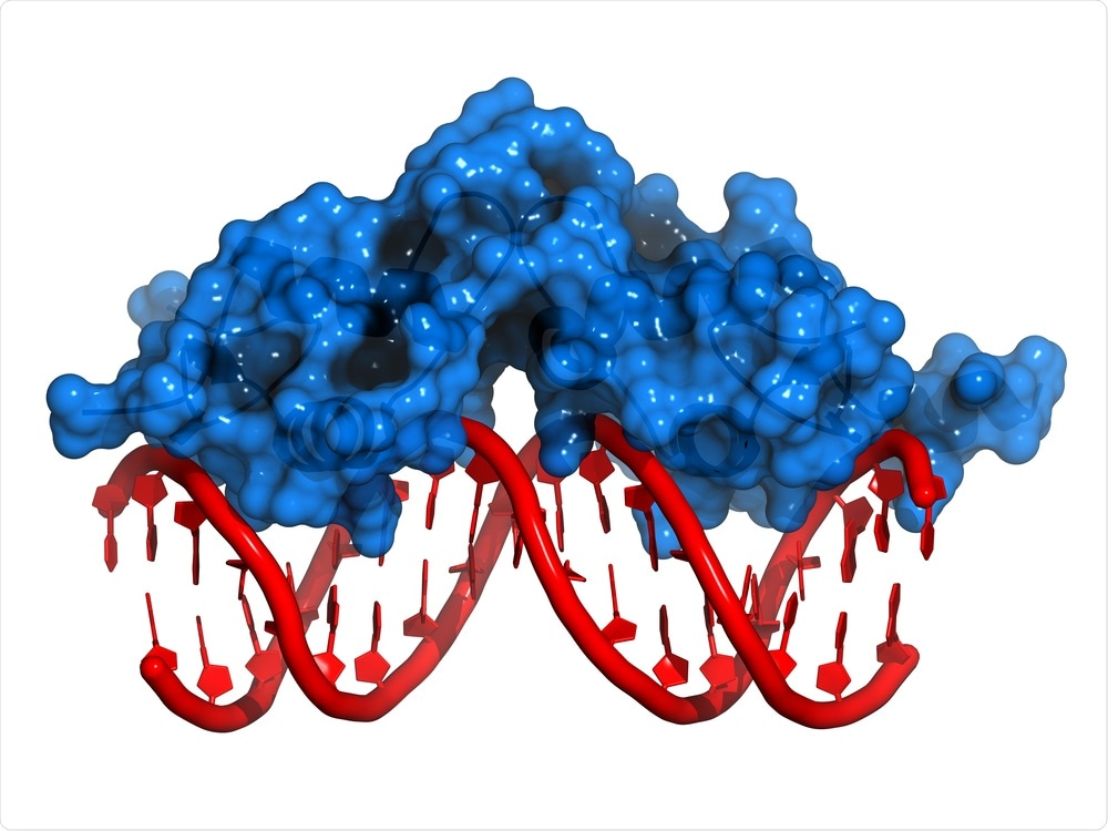 DNA binding protein