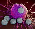 'Relaxed' T Cells are Critical To Immune Response
