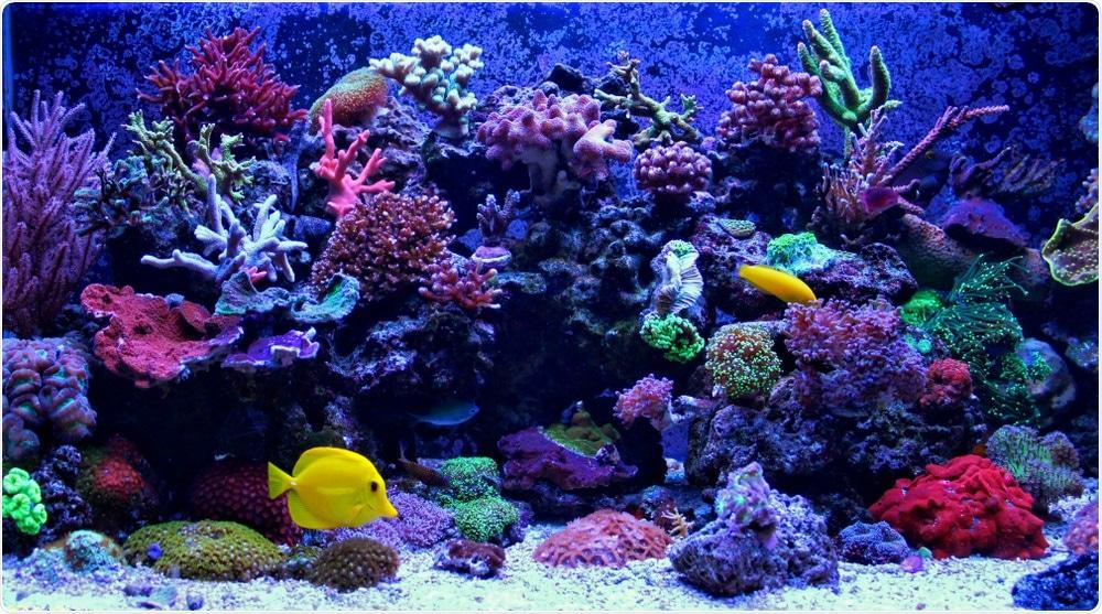 Aquarium Coral