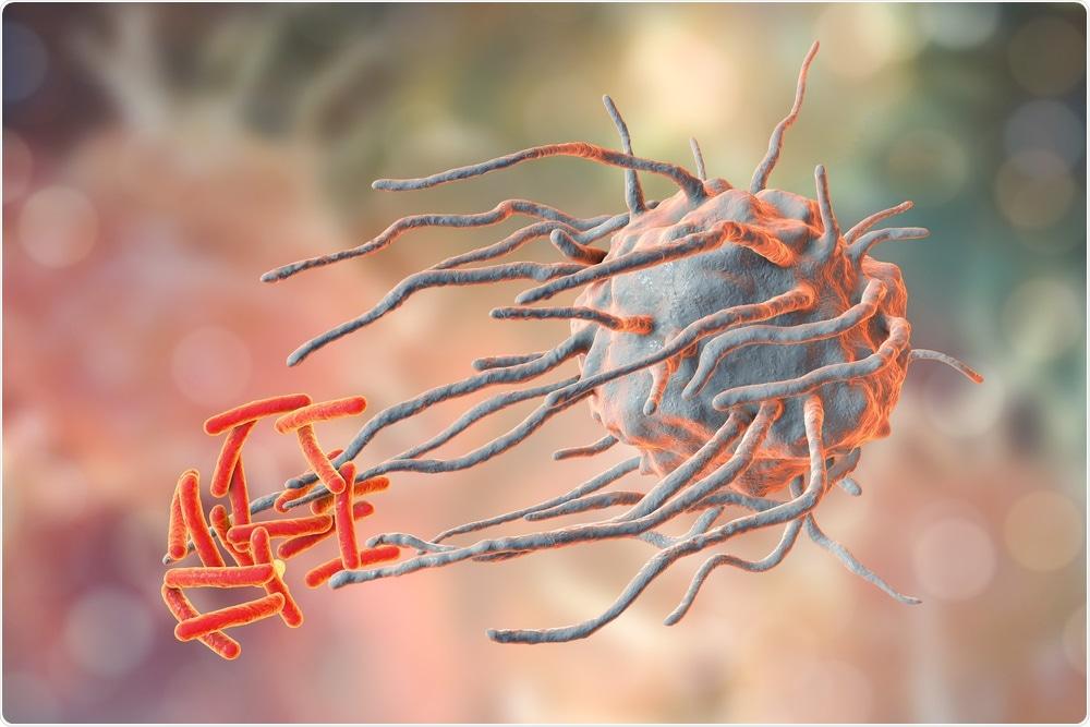 Macrophage engulfing tuberculosis bacteria