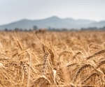 Genomic study can advance wheat research and breeding