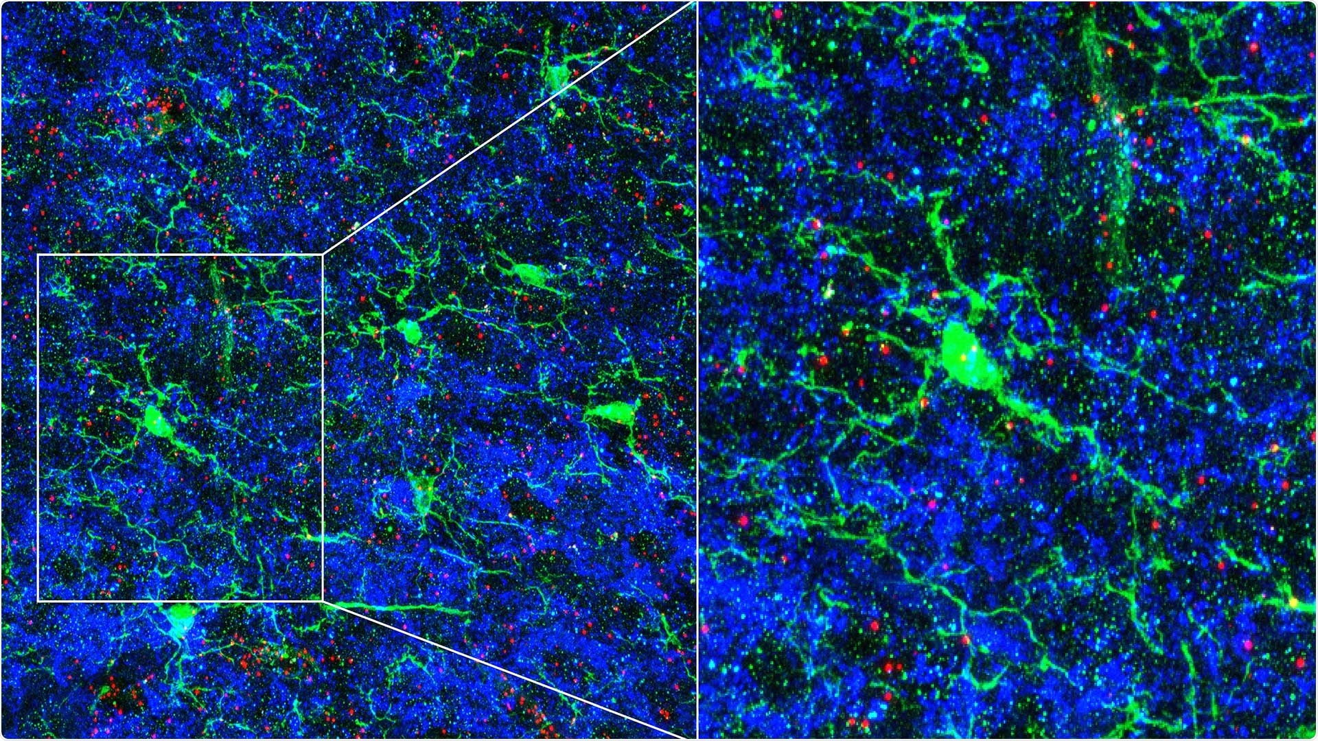 Study shows how neural circuits are refined in response to sensory cues