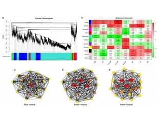 Study identifies gene networks that control sugar and organic acid metabolism during fruit development