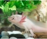 Research provides insights into the evolution of limb development in vertebrates