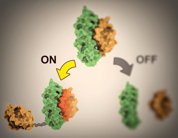 Novel computationally modeled proteins help control cellular processes