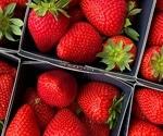 Novel cost-effective model helps ascertain the origin of food