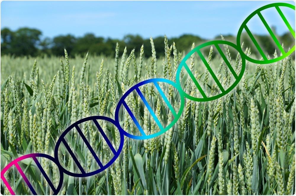 Gene-Edited Crops
