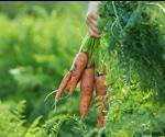 Organic vs Inorganic Farming
