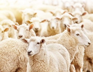 Does the Future of Farming Involve the Gene Editing of Farm Animals?