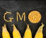 Are Genetically Modified (GM) Crops Saving the World?