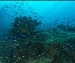 Illegal Fishing and Its Impacts on Conservation and Fisheries