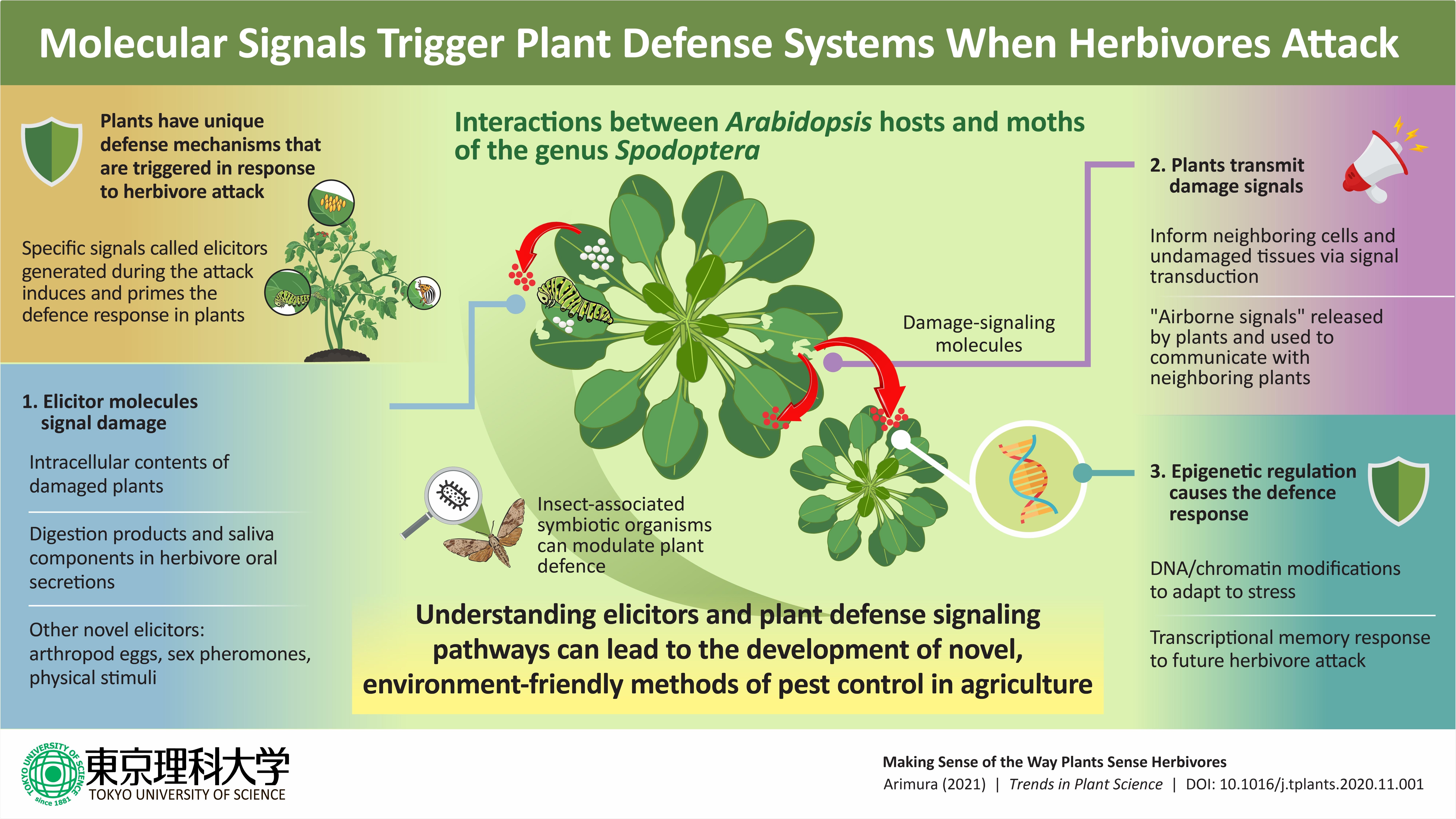 Understanding the herbivory-sensing mechanism of plants through elicitors