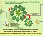 Understanding the herbivory-sensing mechanism of plants through elicitors