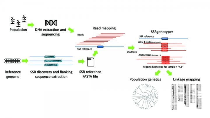 New bioinformatic tool allows scientists to digitally genotype sequenced populations