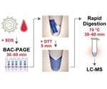 New gel electrophoresis method allows rapid diagnosis of biomarkers by mass spectrometry