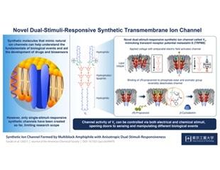 Synthetic biomolecule resembles dual stimuli-responsive channel