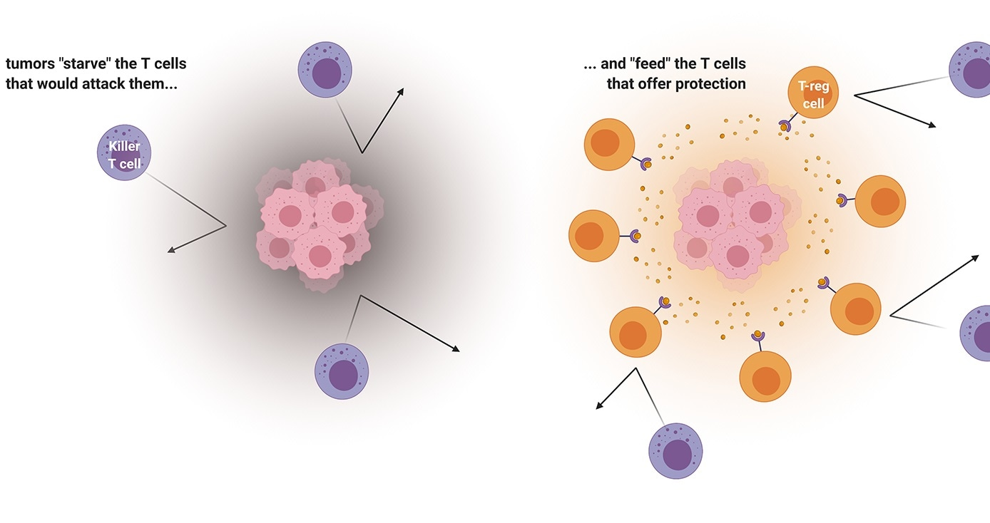 Tumor microenvironment could improve cancer immunotherapy