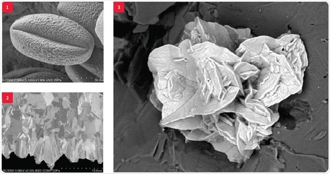 (1) Pollen, low-vacuum SE, 1.5 kV; (2) Metal cross-section, BSE, 3 kV; (3) Copper minerals, low-vacuum, 5 kV.