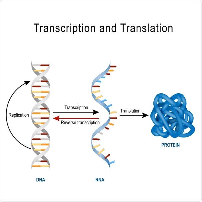 Protein Translation