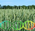 Improving Crop Yields using Genetics