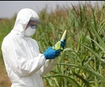 Insight into Genetically Modified Food