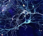 What is Neurobiology?