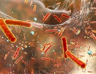 Detecting the levels of antibiotics in food