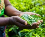 Specific proteins in plants can prevent zinc deficiency in humans
