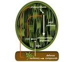 Volatile signal in plants activates defense and inhibits growth processes