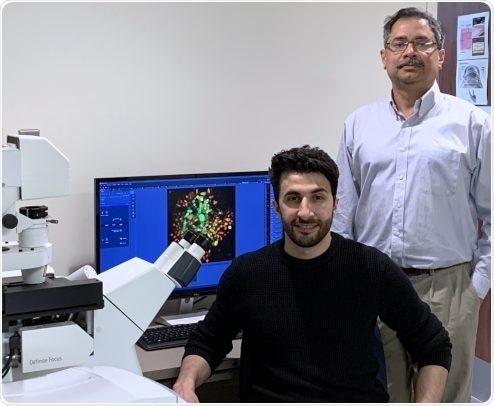 Key protein regulates cells' innate defense mechanisms