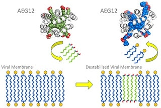 Study on AEG12 mosquito protein could lead to therapeutics against deadly viruses