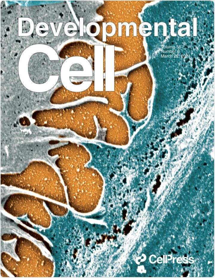Strong cell-cell junctions preserve the quiescent properties of stem cells