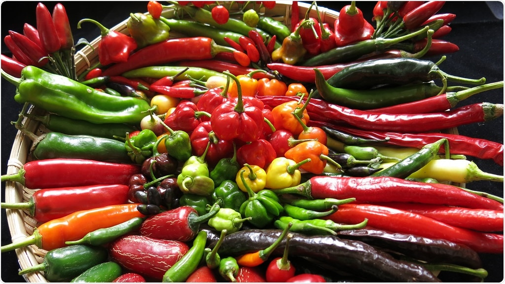 New chilli hybrids can have better disease resistance, boost productivity