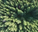 Link between forestry management and pesticides in aquatic species