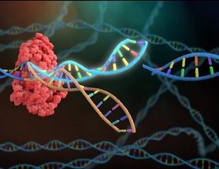 Developing a new CRISPR technique