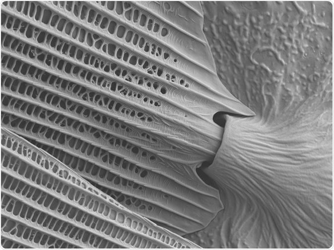 Butterfly Wing under SEM