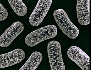 Researchers find effective combination of therapies for managing mitochondrial disease