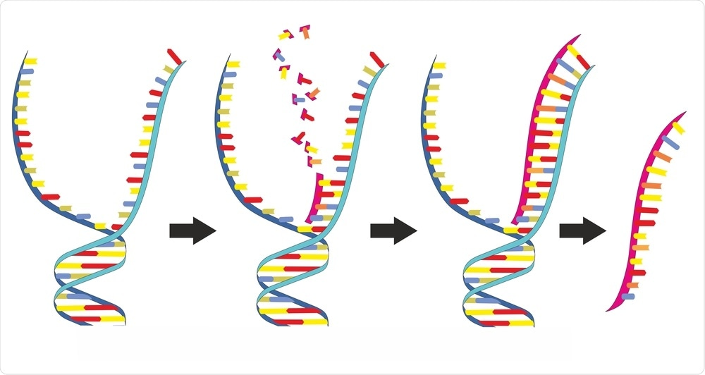 DNA to RNA
