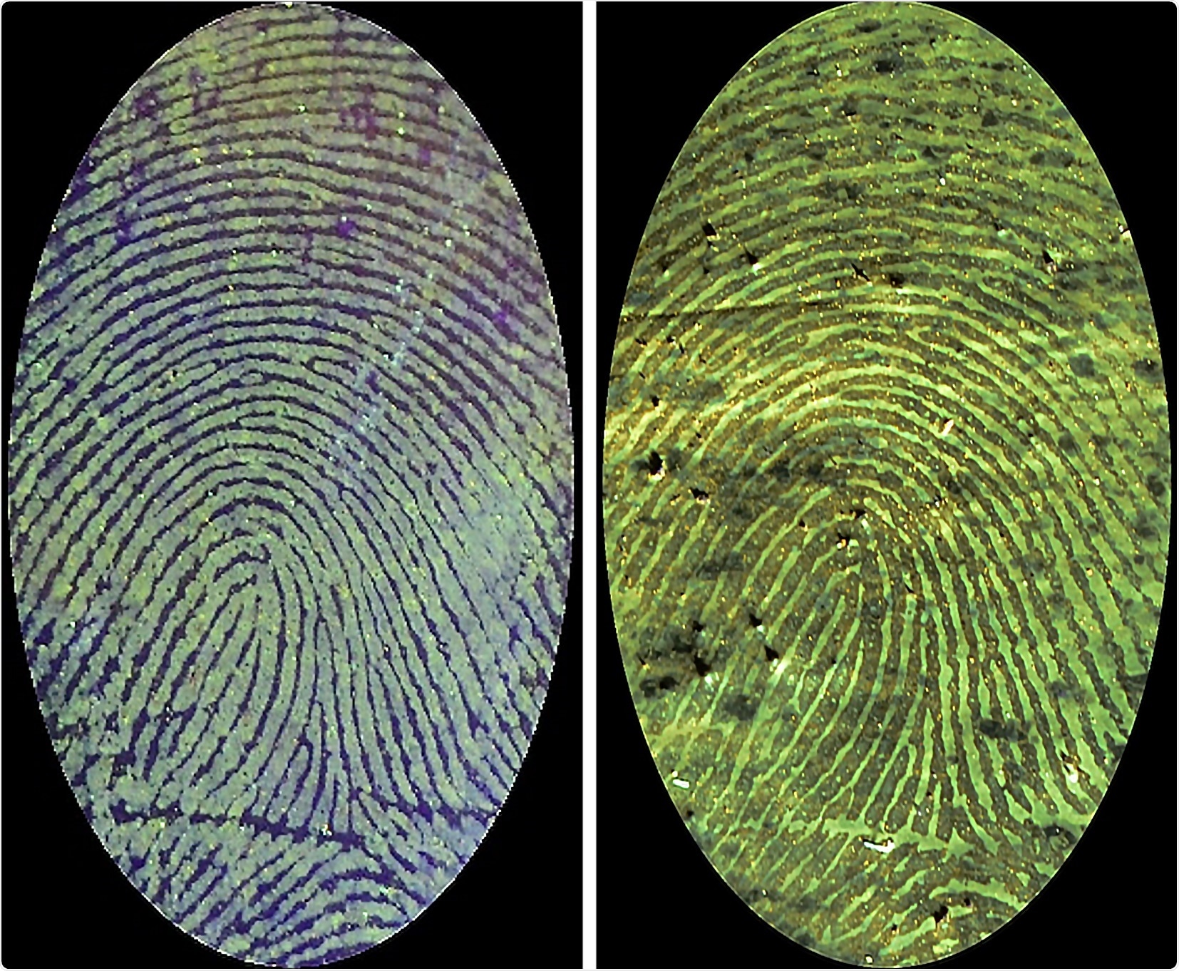 New fluorescent polymer binds to blood in fingerprint to create high-contrast images