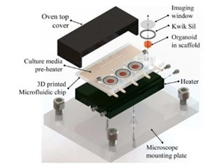3D-printed system enables the growth of self-organizing brain tissue
