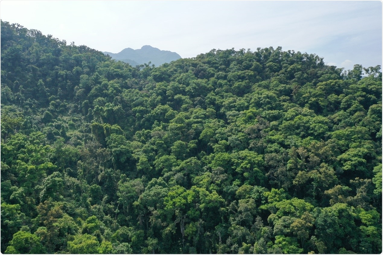 Tropical forests can capture CO2 into soils and reduce its emission